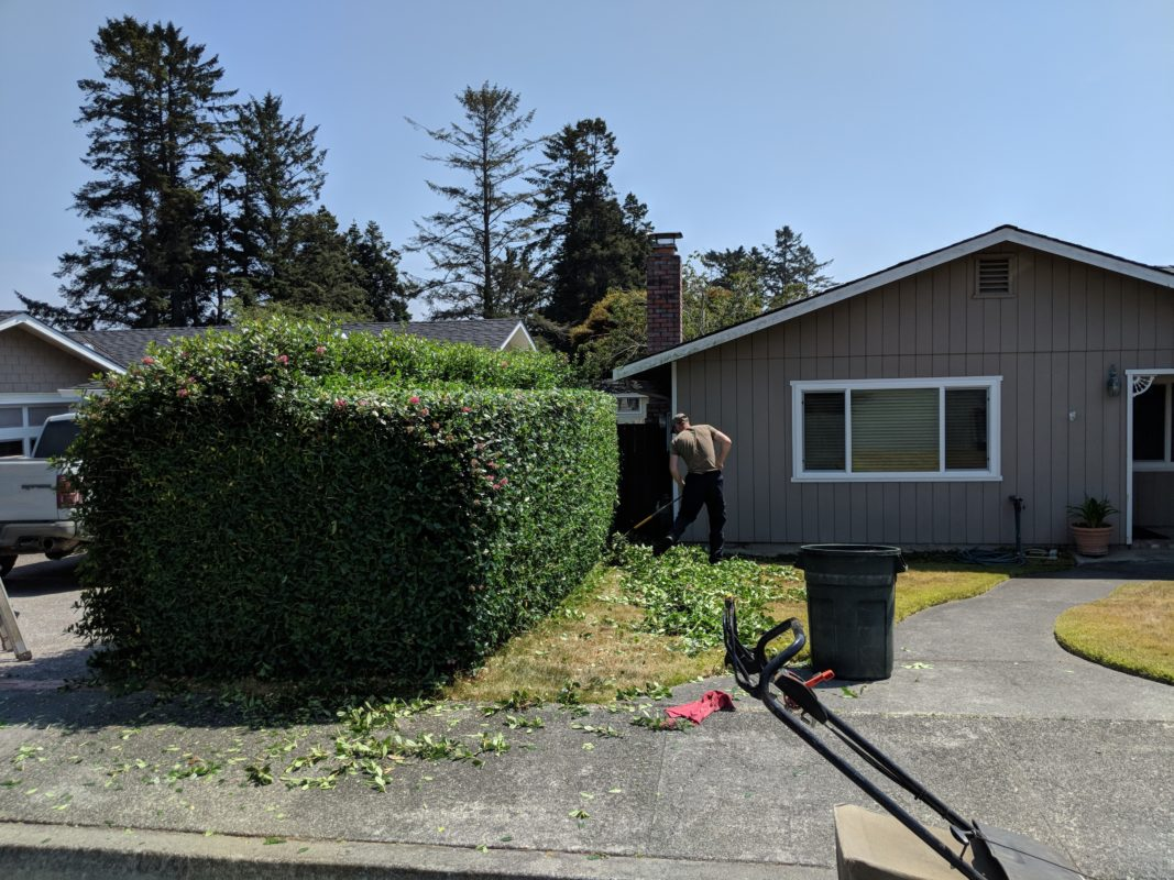 "<span style=""color: #065b28;"" class=""ugb-highlight"">Tree Pruning and Hedge Trimming</span>"